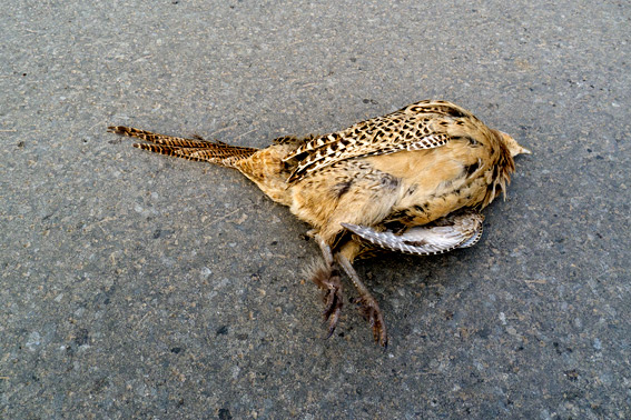 Animal Roadkill