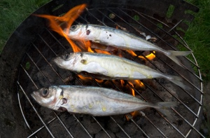flaming jackfish